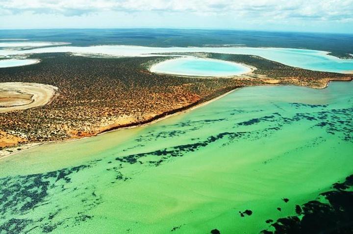 鲨鱼湾位于澳大利亚西部,以多样化的自然美而闻名于世,拥有世界上最大的海草床、大量当地特色的动物、五种濒临灭绝的哺乳动物和澳大利亚1/3的鸟类品种。 鲨鱼湾最大的特点是由蓝绿色海藻形成的叠层岩和形似岩石的结构。